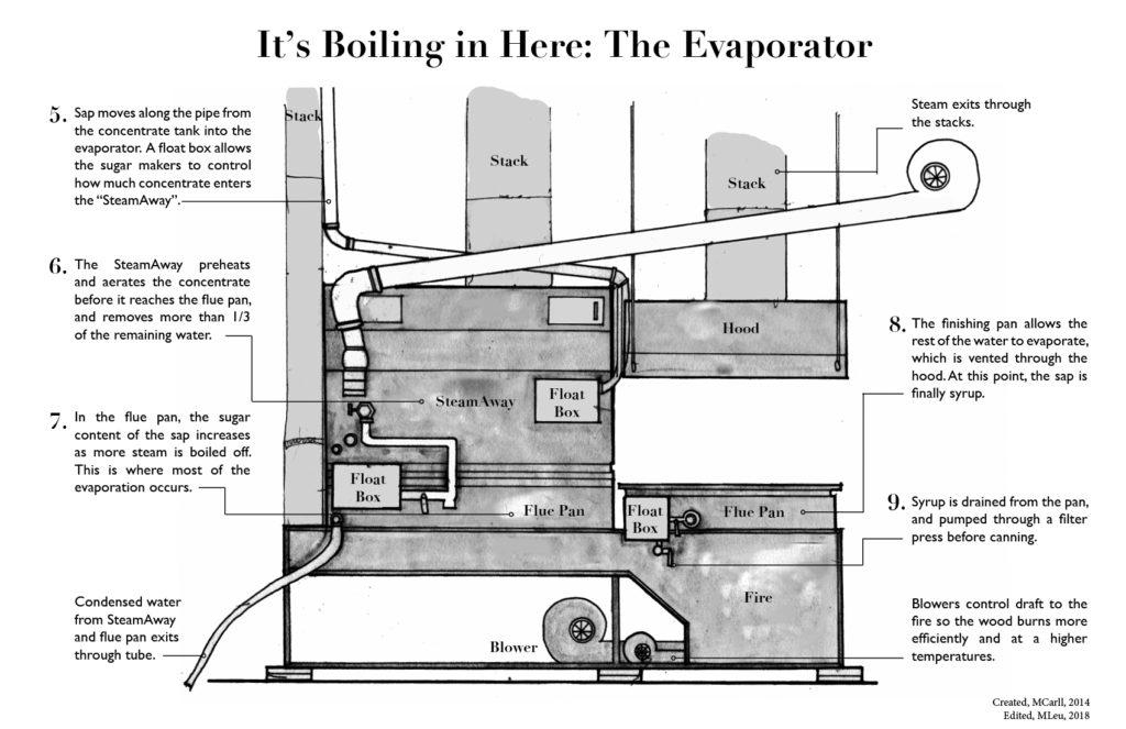sugar, how it's made, evaporator, process